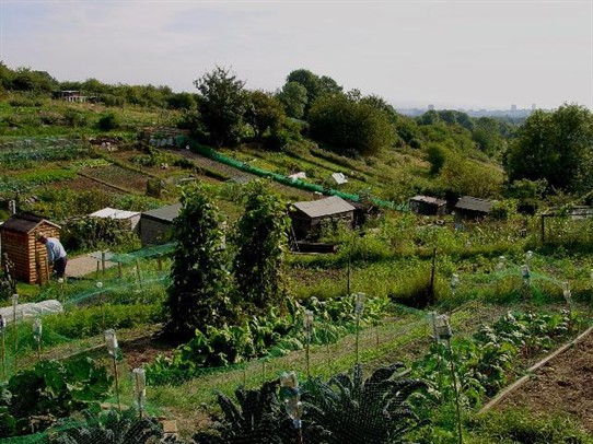 Photo:An allotment